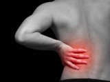 Iliopsoas The most likely low back pain muscle